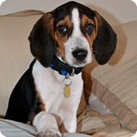 Adopt A Pet :: Max - Richmond, VA