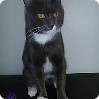 Adopt A Pet :: Jacob - Hamburg, NY