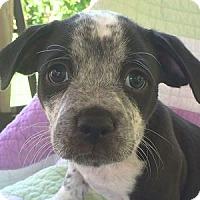 Adopt A Pet :: Levi - La Costa, CA