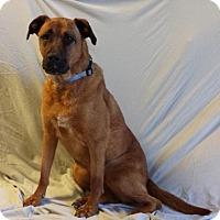 Adopt A Pet :: Lizzy - Encino, CA