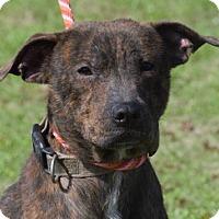 Adopt A Pet :: Tom - Choudrant, LA