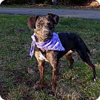 Adopt A Pet :: Spice - Mocksville, NC