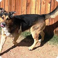Adopt A Pet :: Bandit - Gilbert, AZ