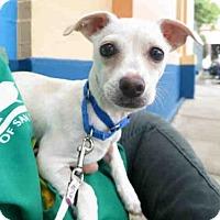 Adopt A Pet :: BINGO - San Francisco, CA
