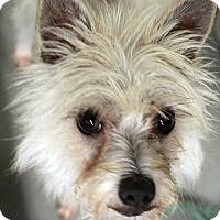 Adopt A Pet :: Sophie - Waco, TX
