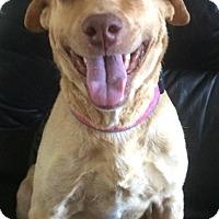Adopt A Pet :: Smiley - Gainesville, FL