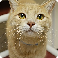 Adopt A Pet :: Griffin - Springfield, IL