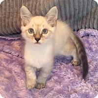 Adopt A Pet :: Tipp - Houston, TX