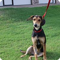 Adopt A Pet :: ARNOLD - Phoenix, AZ