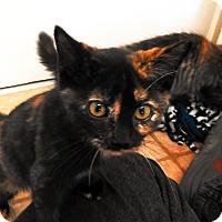 Adopt A Pet :: Fleayonce - Cloquet, MN