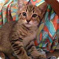 Adopt A Pet :: Starke - Gainesville, FL