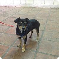 Adopt A Pet :: CALI - Mesa, AZ