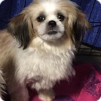 Adopt A Pet :: Donner - Overland Park, KS