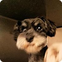 Adopt A Pet :: kenny - Rock Hill, SC