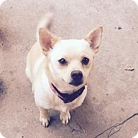 Adopt A Pet :: Harper - FORT WORTH, TX