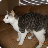 Adopt A Pet :: spartakas - haslet, TX