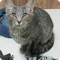 Adopt A Pet :: Maybelline - Reeds Spring, MO