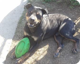 Hercules | Adopted Dog | A155959 | Chula Vista, CA ...