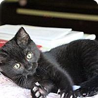 Adopt A Pet :: Uno - Eagan, MN