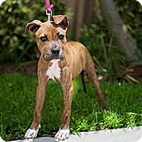 Adopt A Pet :: Mary Jane - Miami, FL
