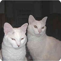 Adopt A Pet :: Casper n Crystal - Little Falls, NJ
