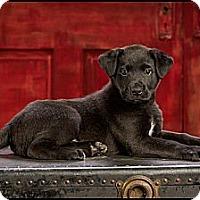 Adopt A Pet :: Kyle - Owensboro, KY