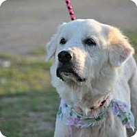 Adopt A Pet :: Alanya Grace - Austin, TX