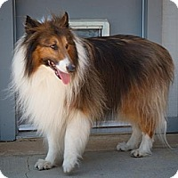 Adopt A Pet :: Jessie - Rancho Cucamonga, CA