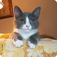 Adopt A Pet :: Raye - Dover, OH