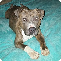 Adopt A Pet :: Maximus - Knoxville, TN