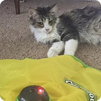 Adopt A Pet :: Neeva - Glendale, AZ