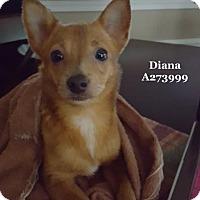 Adopt A Pet :: ELIZABETH (BIFFY-BIF) - Conroe, TX