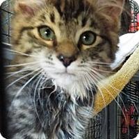Adopt A Pet :: Hansel - Grants Pass, OR