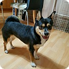 Adopt A Pet :: Boomi