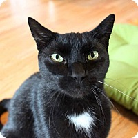 Adopt A Pet :: Whiskers - Putnam, CT