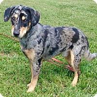 Adopt A Pet :: Patrick - Oswego, IL