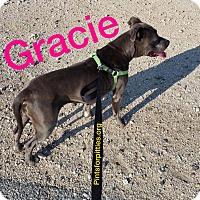 Adopt A Pet :: Gracie - Brighton, CO