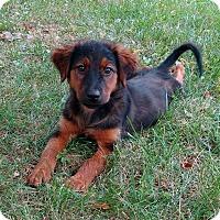 Adopt A Pet :: Karli - New Oxford, PA