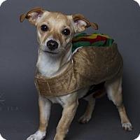 Dachshund Mix Dog for adoption in Baton Rouge, Louisiana - Penelope