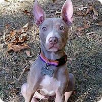 Adopt A Pet :: Morticia - McCalla, AL