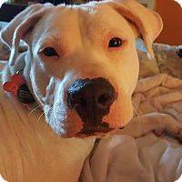 Adopt A Pet :: Eddison - ADOPTED - Troy, MI