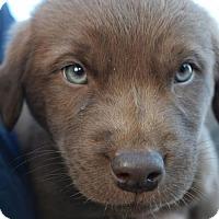 Adopt A Pet :: Archer - Prosser, WA