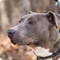 Adopt A Pet :: Tinker Bell - Clarkesville, GA