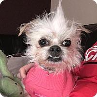 Adopt A Pet :: Bixie - Dallas, TX