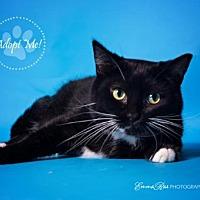 Adopt A Pet :: Salem - Mt. Clemens, MI