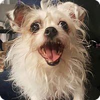 Adopt A Pet :: Queen - Canoga Park, CA