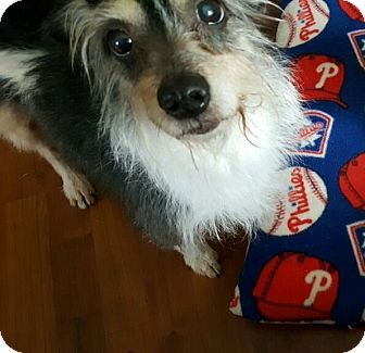 Small Dogs Up For Adoption In Pa