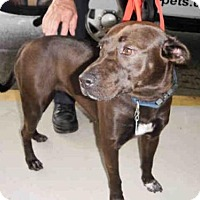 Adopt A Pet :: GRACE - Naples, FL