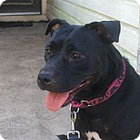 Adopt A Pet :: Bella - Orange Park, FL