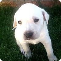 Adopt A Pet :: ASTRO - Torrance, CA